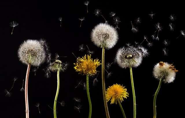flores con polen alergias