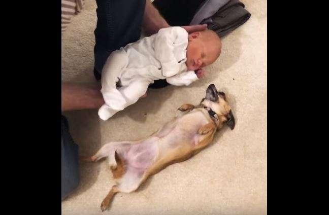 mascotas y bebes recien nacido con perro
