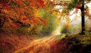 boque en otoño naturaleza talleres
