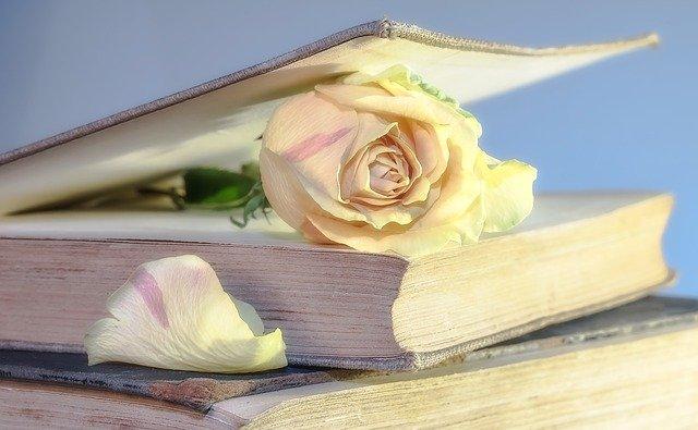 dia del libro rosa